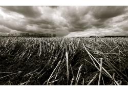 田园风光黑白照片