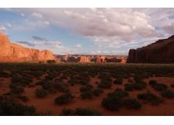 山石沙漠绿色植物