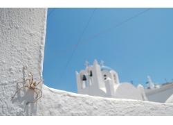 白色城堡蜘蛛