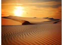 金色沙漠风光