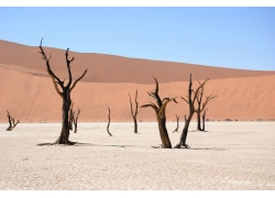 沙漠上的许多干树