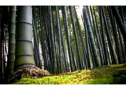 草地上的竹子