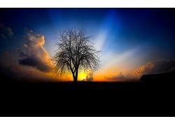 红霞日出小树风光