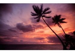 椰树红霞日出壁纸