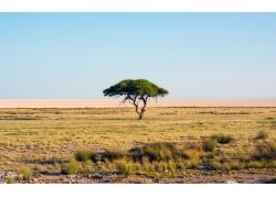 草原上的大树