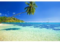 椰树与海洋风景