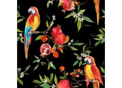 水彩画石榴鹦鹉