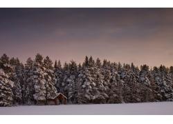 冬天树林雪景