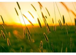 草丛日出风景