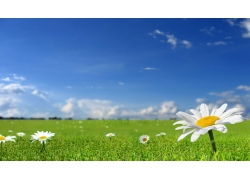 草原鲜花风景