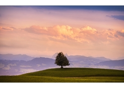 草原树木景色