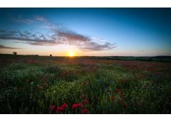 鲜花草地日出风景