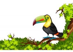 卡通巨嘴鸟漫画图片