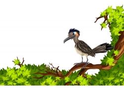 树枝上的鸟类插画图片