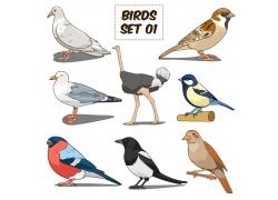 卡通驼鸟鸽子插画