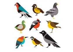 各种颜色的小鸟