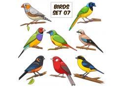 卡通燕雀鹦鹉插画