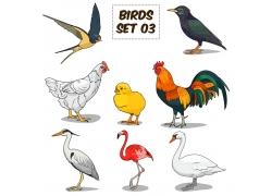 彩色家禽鸟类插画