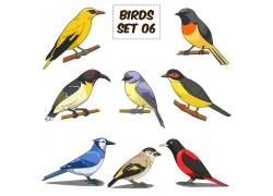 一群彩色小鸟