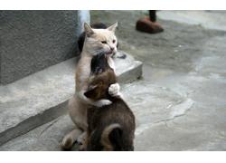 拥抱的猫狗图片