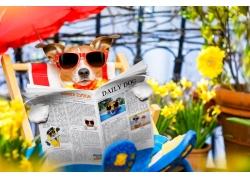 看报纸小狗