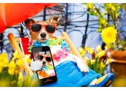 手机自拍狗