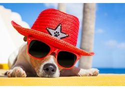 可爱帽子墨镜小狗