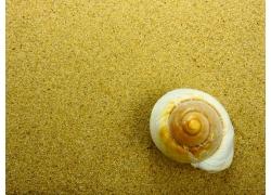 金色沙子海螺