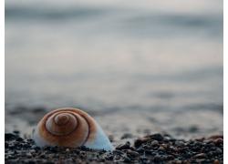 石头上的海螺
