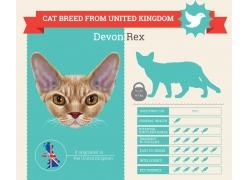 小猫动物信息图表