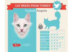 白色小猫图表