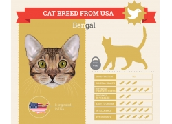 可爱小猫信息图表