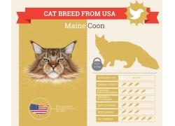 猫咪鱼信息图表