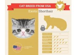 灰色小猫鱼信息图表
