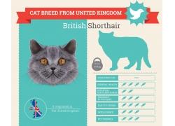 可爱小猫图表