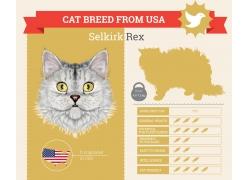 美国小猫信息图表
