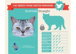 米旗灰色小猫图表
