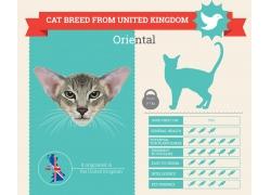 飞鸟小猫信息图表