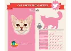 粉色小猫图表
