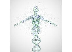 DNA结构和人物