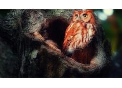 树洞猫头鹰风光