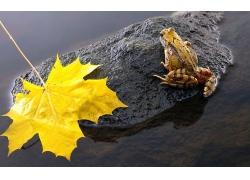 岩石上的青蛙与树叶