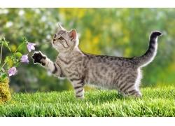草地小花灰色小猫