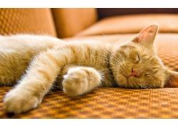 沙发上睡觉的小猫