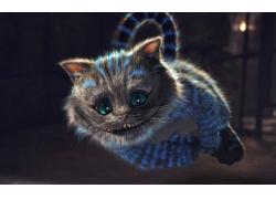 可爱的小猫