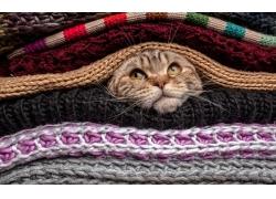 毛衣与小猫摄影