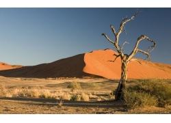 沙漠枯树风景