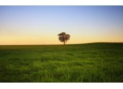 草原树木风景