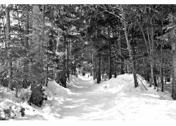 冬天林荫道路雪景