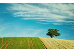 田园树木风景